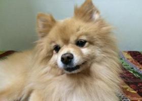 3月19号下午五点被人抱走,18岁的老狗了!在上海浦东