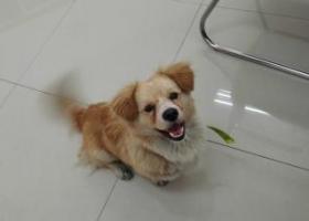 寻狗启示,在无锡科技职业学院内,挺可爱的,腿受了点伤,脖子有绿色项圈,它是一只非常可爱的宠物狗狗,希望它早日回家,不要变成流浪狗。