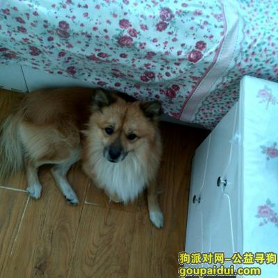 承德寻狗网,承德寻找狐狸犬欢欢,欢宝宝快回家吧!!,它是一只非常可爱的宠物狗狗,希望它早日回家,不要变成流浪狗。