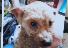 上海普陀区真光路桃浦路酬谢三千元寻找爱犬