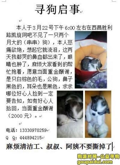 凉山寻狗启示,一只串串不见了,好担心。,它是一只非常可爱的宠物狗狗,希望它早日回家,不要变成流浪狗。