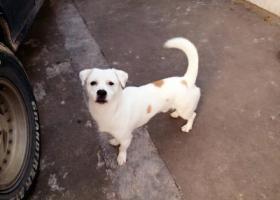 寻狗启示,我家狗狗SUNY 又失蹤了,它是一只非常可爱的宠物狗狗,希望它早日回家,不要变成流浪狗。