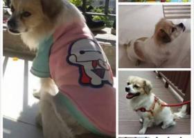 寻狗启示,【寻狗启示】广东中山小榄镇绩东二附近,它是一只非常可爱的宠物狗狗,希望它早日回家,不要变成流浪狗。
