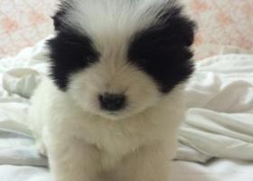 寻狗启示,在珠海金湾区或斗门的朋友帮忙留意下,找到后重谢,帮帮忙,谢谢大家,它是一只非常可爱的宠物狗狗,希望它早日回家,不要变成流浪狗。