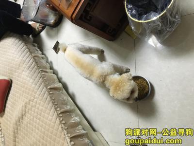 鄂州寻狗网,自己的狗狗没找到,家里来了另一只狗,它是一只非常可爱的宠物狗狗,希望它早日回家,不要变成流浪狗。