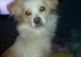 爱犬对我们很重要!我和妈妈还有爱犬三口之家!