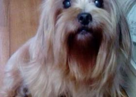 上海杨浦寻狗,希望大家帮忙爱心转发,好人一生平安