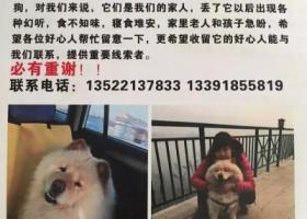 北京市大兴区寻狗。。。。。。