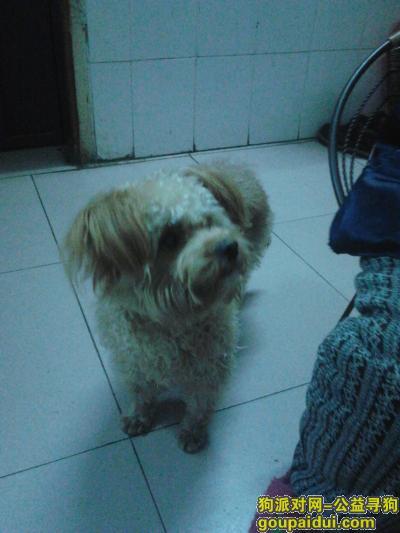 贺州丢狗,求求你们帮我找一找T_T,它是一只非常可爱的宠物狗狗,希望它早日回家,不要变成流浪狗。