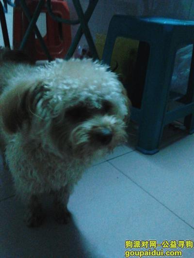 贺州寻狗,请大家帮我找一找T_T,它是一只非常可爱的宠物狗狗,希望它早日回家,不要变成流浪狗。