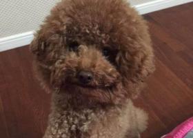 寻狗启示,急寻狗狗,坐标江苏淮安,它是一只非常可爱的宠物狗狗,希望它早日回家,不要变成流浪狗。
