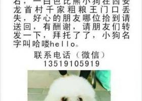 寻找4月7日早上丢失于西安龙首村祯祥宝库的比熊犬