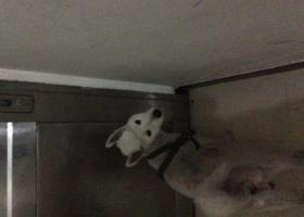 寻狗启示,东莞市万江道滘检到狗,它是一只非常可爱的宠物狗狗,希望它早日回家,不要变成流浪狗。