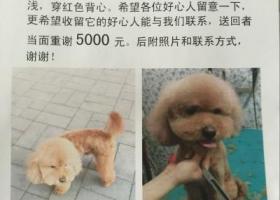 北京左家庄寻找爱犬,心急如焚