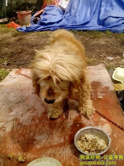 盐城寻狗主人,上冈加油站捡到一只大耳朵短尾狗,它是一只非常可爱的宠物狗狗,希望它早日回家,不要变成流浪狗。