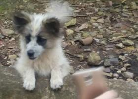 寻狗启示,猪八戒电子厂附近丢的电话15005703921,它是一只非常可爱的宠物狗狗,希望它早日回家,不要变成流浪狗。