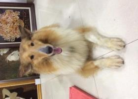 寻狗启示,已经找到,它是一只非常可爱的宠物狗狗,希望它早日回家,不要变成流浪狗。