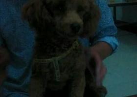 寻狗启示,泗阳的好心人士帮帮我,它是一只非常可爱的宠物狗狗,希望它早日回家,不要变成流浪狗。