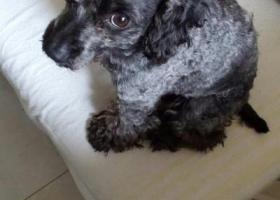 寻狗启示,找一只走失的黑狗,找到着给1000现金,它是一只非常可爱的宠物狗狗,希望它早日回家,不要变成流浪狗。