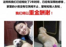 广州寻找丢失狗狗,重金酬谢!求好心人提供帮助