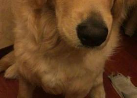 寻狗启示,寻狗启示 我家宝贝11个月,它是一只非常可爱的宠物狗狗,希望它早日回家,不要变成流浪狗。