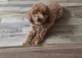 寻狗启示,我家棕黄色走丢了 公狗1岁 安丘下株梧水库 拜托各位了,它是一只非常可爱的宠物狗狗,希望它早日回家,不要变成流浪狗。