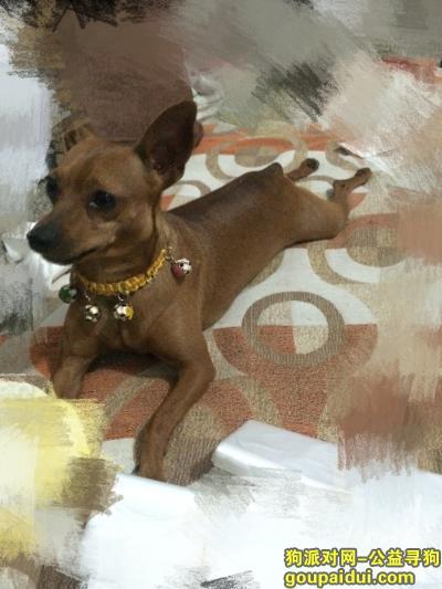 莱芜寻狗,山东莱芜王先生寻找狗狗鹿鹿,它是一只非常可爱的宠物狗狗,希望它早日回家,不要变成流浪狗。