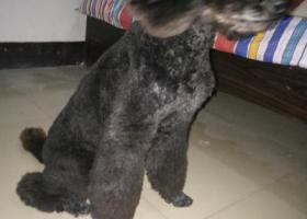 寻狗启示,巨贵走失了求好心人帮忙,它是一只非常可爱的宠物狗狗,希望它早日回家,不要变成流浪狗。