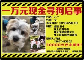 上海青浦松江交界处走丢一只小狗叫六一