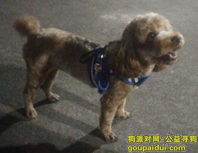 【广州找狗】,广州市海珠区工业大道中 丢失爱犬 重酬,它是一只非常可爱的宠物狗狗,希望它早日回家,不要变成流浪狗。