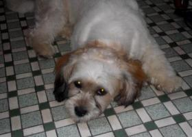 寻狗启示,寻狗狗主人 如果狗狗主人看到这帖子请把它领回家吧,它是一只非常可爱的宠物狗狗,希望它早日回家,不要变成流浪狗。
