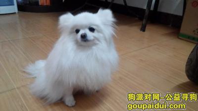新乡寻狗主人,河南省新乡市怡园小区我带白博美犬走了,它是一只非常可爱的宠物狗狗,希望它早日回家,不要变成流浪狗。