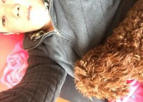 寻狗启示,文登蔄山镇找母泰迪一只我17号下午在文登蔄山镇政府丢了一只母的泰迪,谁能帮忙找到,我愿意付1000元联系电话13370900202,它是一只非常可爱的宠物狗狗,希望它早日回家,不要变成流浪狗。