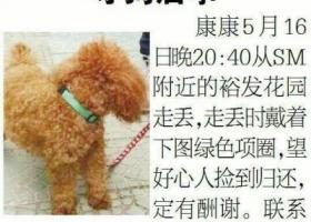 寻狗启示,快回来吧(走失时戴着图中绿色项圈),它是一只非常可爱的宠物狗狗,希望它早日回家,不要变成流浪狗。