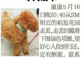 寻狗启示,寻狗启示——康康你在哪呀,它是一只非常可爱的宠物狗狗,希望它早日回家,不要变成流浪狗。