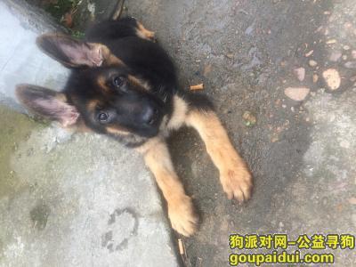衢州找狗,我的狗狗是昨天晚上五点走丢  希望看见或收留的请与我联系  当面感谢,它是一只非常可爱的宠物狗狗,希望它早日回家,不要变成流浪狗。