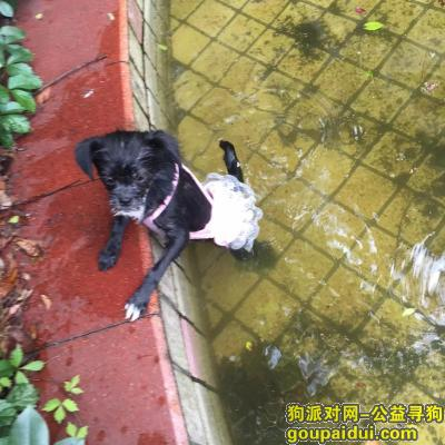 衢州寻狗启示,寻狗狗 交易城车站丢失 找到以身相许,它是一只非常可爱的宠物狗狗,希望它早日回家,不要变成流浪狗。