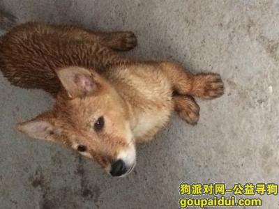 金华寻狗主人,磐安路边捡到一只狗黄色,小型犬,它是一只非常可爱的宠物狗狗,希望它早日回家,不要变成流浪狗。