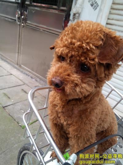 义乌捡到狗,找不到回家的路,请大家告知一下我的主人,它是一只非常可爱的宠物狗狗,希望它早日回家,不要变成流浪狗。