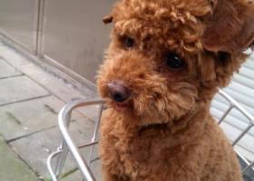 寻狗启示,找不到回家的路,请大家告知一下我的主人,它是一只非常可爱的宠物狗狗,希望它早日回家,不要变成流浪狗。