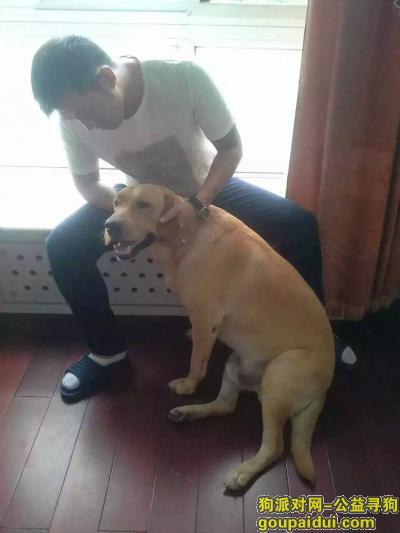 寻狗启示,辽宁沈阳铁西肇工街南十西路华天新城寻狗,它是一只非常可爱的宠物狗狗,希望它早日回家,不要变成流浪狗。