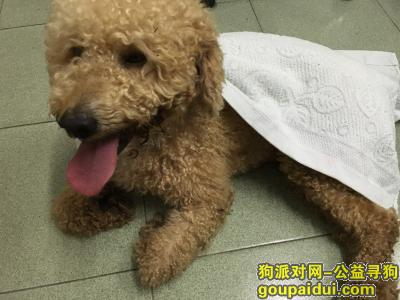 寻狗启示,东坑黄麻岭生态园附近丢失爱狗,它是一只非常可爱的宠物狗狗,希望它早日回家,不要变成流浪狗。