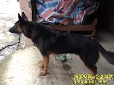 寻狗启示,5月24日从南海区龙一村家中走失,如知情人士透露消息,必定重谢,它是一只非常可爱的宠物狗狗,希望它早日回家,不要变成流浪狗。