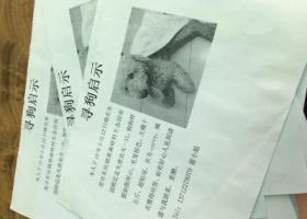 16年5月22日于长安塘附近丢失爱狗