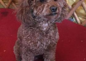 寻狗启示,内蒙古乌海市海区海晨小区主人寻狗狗,它是一只非常可爱的宠物狗狗,希望它早日回家,不要变成流浪狗。