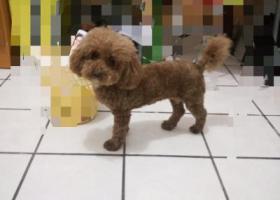 寻狗启示,厦门市海沧区海裕路菜市场建瓯公寓处走失请帮帮我!,它是一只非常可爱的宠物狗狗,希望它早日回家,不要变成流浪狗。