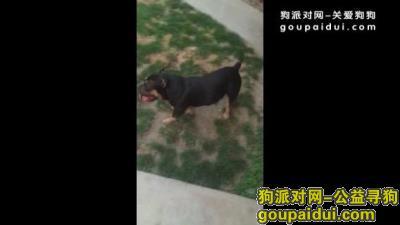 寻狗启示,1岁半公犬,它是一只非常可爱的宠物狗狗,希望它早日回家,不要变成流浪狗。