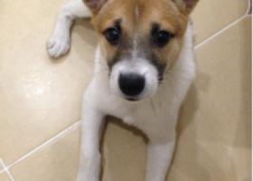 宁波小港找狗小港宏源路亚洲纸浆业门口走失小狗一只,望看到或者抱走的好心人和我联系电话13566368731,给予1000元感谢费!