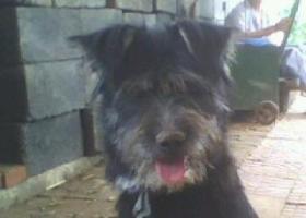 寻狗启示,这只狗丢了四年多了,希望能有消息。,它是一只非常可爱的宠物狗狗,希望它早日回家,不要变成流浪狗。
