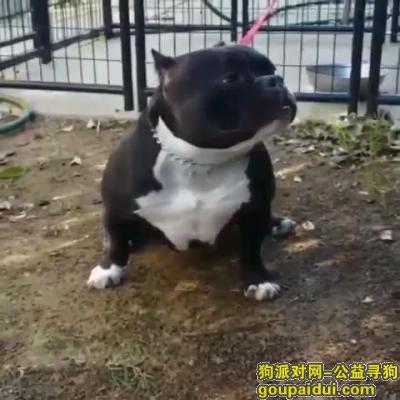 可爱狗狗,1岁半母犬,它是一只非常可爱的宠物狗狗,希望它早日回家,不要变成流浪狗。